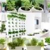 Kuhuinjski vrt sa začinima