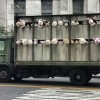 Zvuk janjadi by Banksy