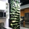 Vrt u kuhinji