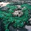 Neobična umjetnost: Sian Ka'an je predivan rezervat ukrašen smećem