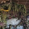 Umjetnički projekt cvijećem oživio napuštenu kuću u Detroitu