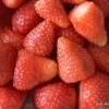 Tiramisu s jagodama