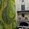 Mahovina može poslužiti kao savršen dekor zidova umjesto slika