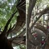 Vrtić koji je nastao oko stabla stradalog tijekom jako tajfuna