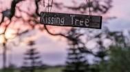 Poljubac ispod imele