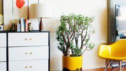 DIY vikend - napravite sami svoju modernu teglicu za cvijeće