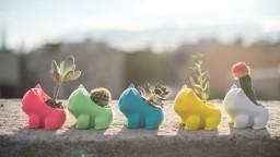 Sjećate se Pokemona? Sada ih možete sami uzgojiti!