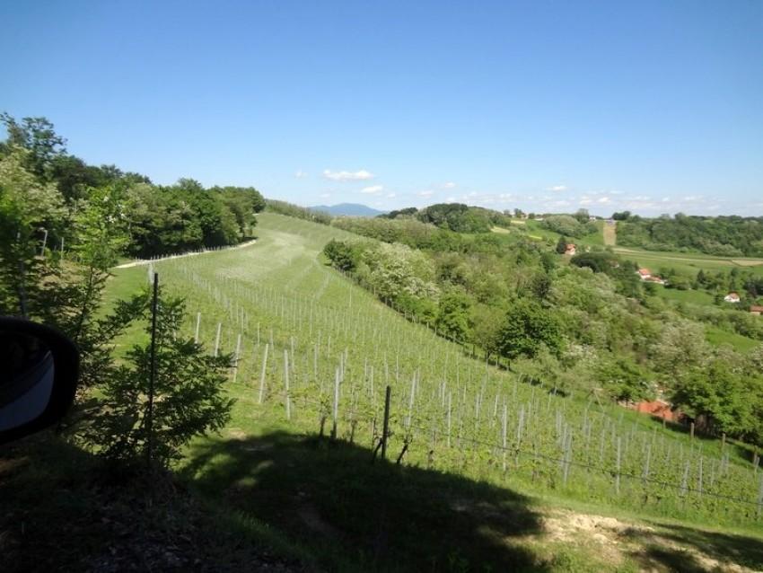 Petračevi vinogradi i čokoti