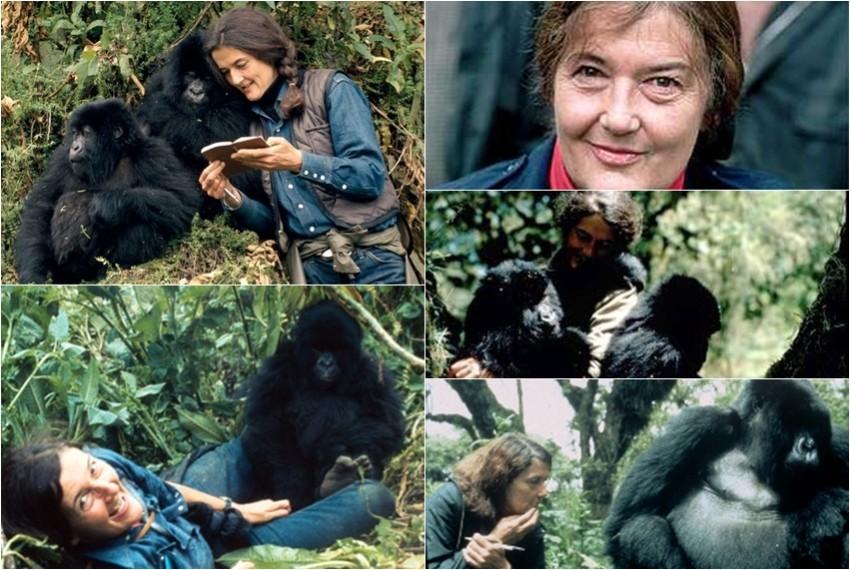 Dian Fossey s gorilama