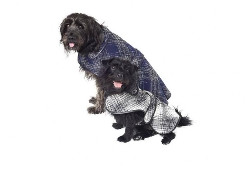 Oscar de la Renta kaputići za pse