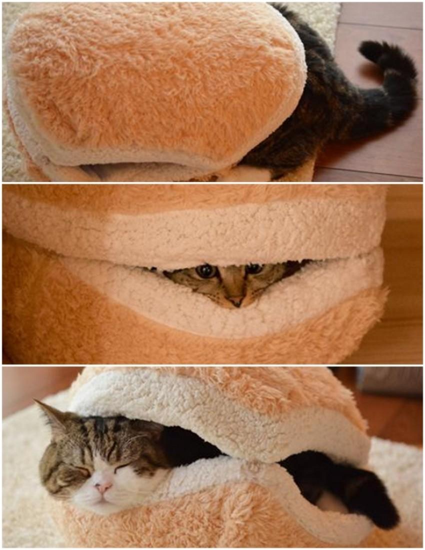 Hamburger za vašu micu macu