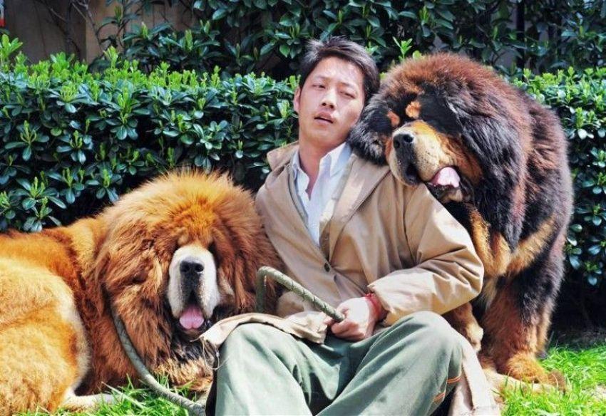 Upoznajte psića koji vrijedi 2 milijuna dolara