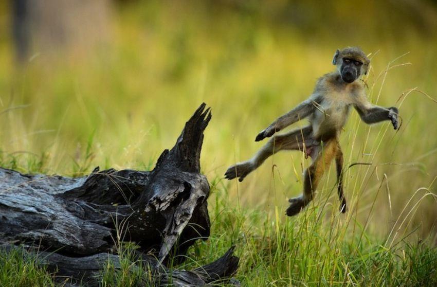 Moremi, Okavango Delta,Bocvana; Chris Schmid