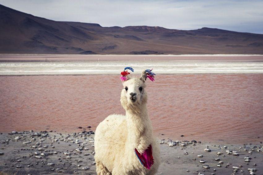 Laguna Colorado, Bolivia;Esther Buttery