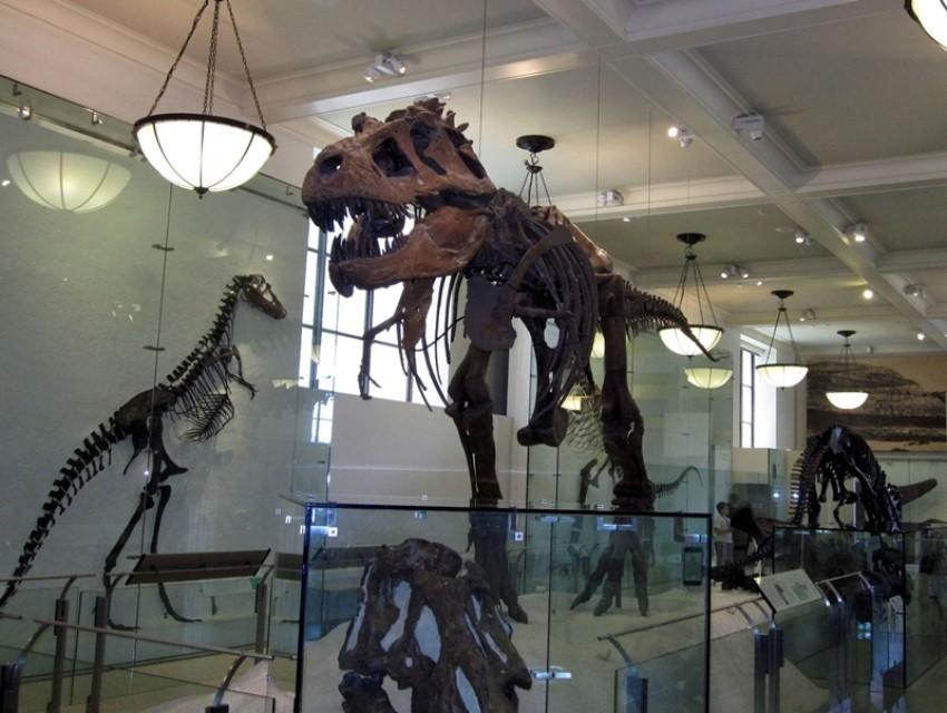 Od sada u New Yorku možete prespavati u muzeju