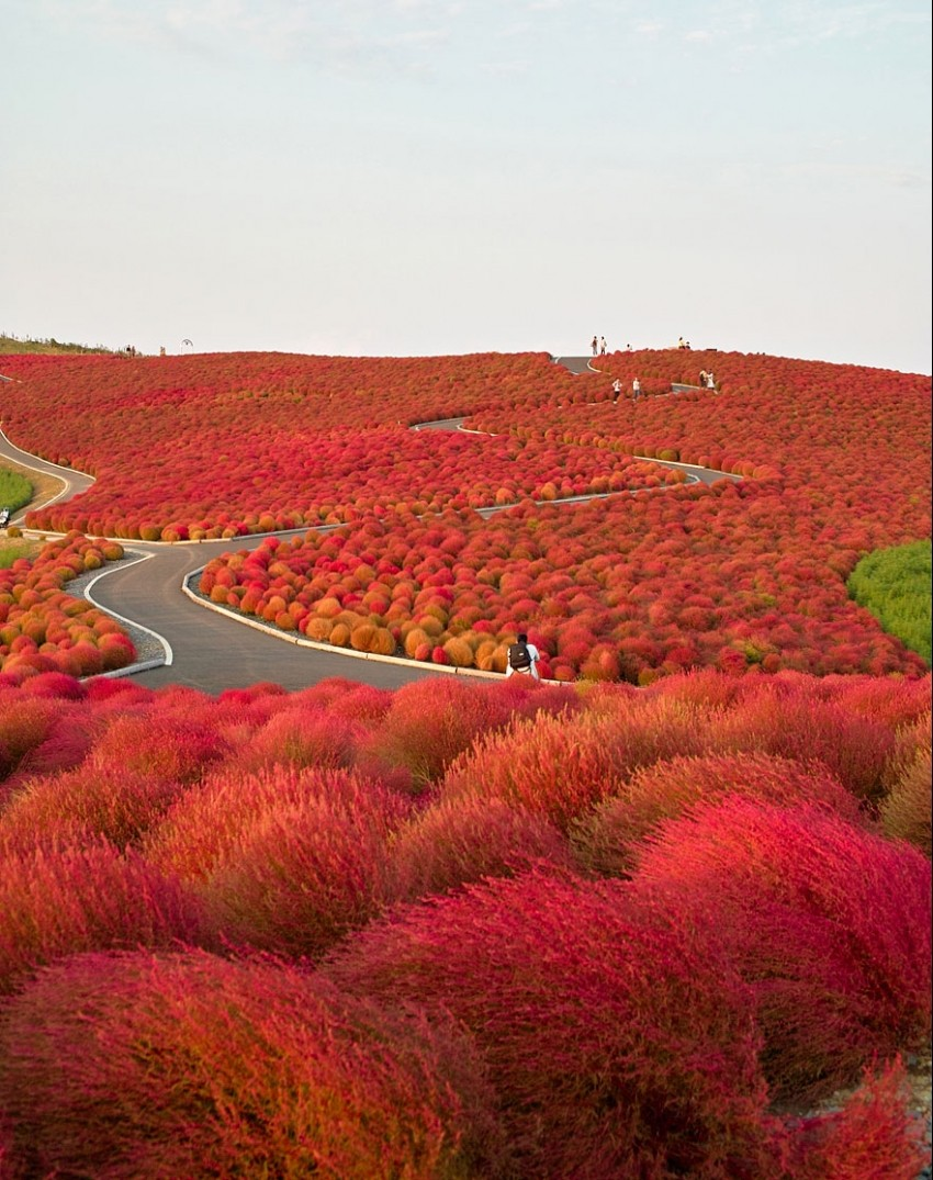 Hitachi Seaside Park Path In Japan