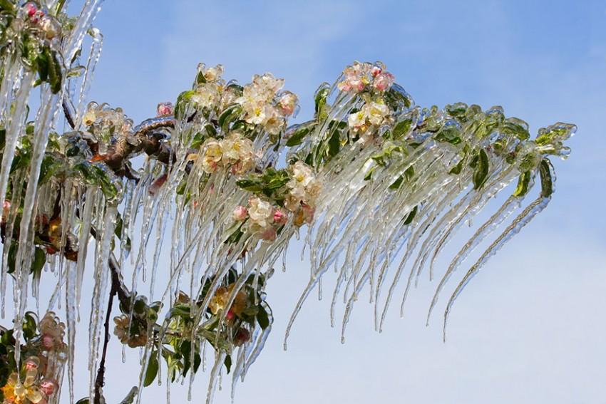 Sasvim prirodno: Najljepša ledena umjetnost diljem svijeta