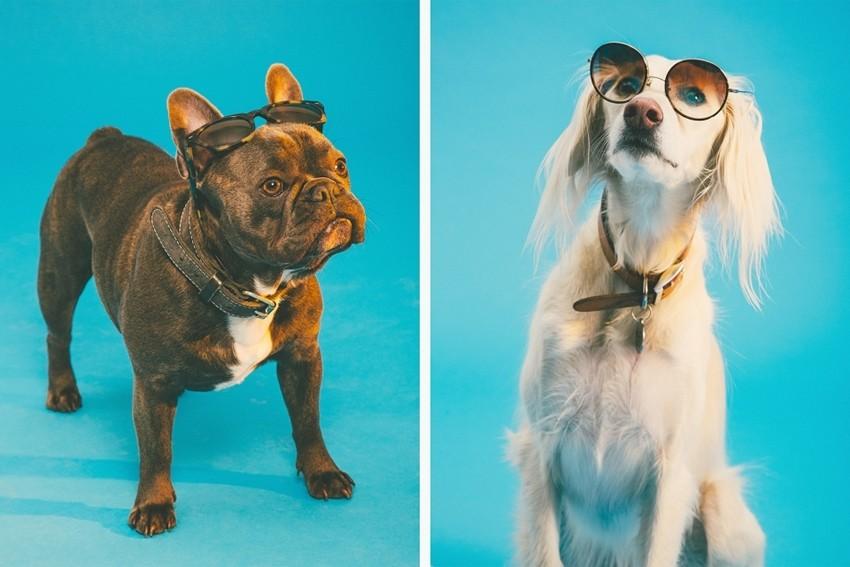 Sunčane naočale za pasju vrućinu - dosad najslađi editorijal 2015.