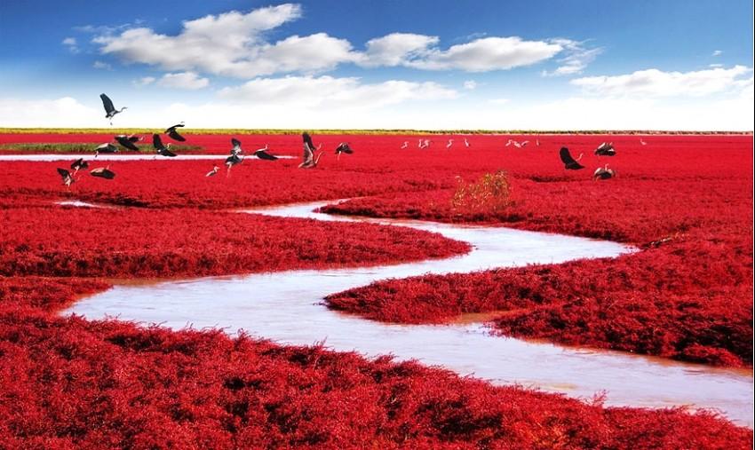 Red Beach, Panjin, Kina