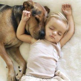 Istraživanje potvrdilo da djeca u obitelji najviše vole - psića
