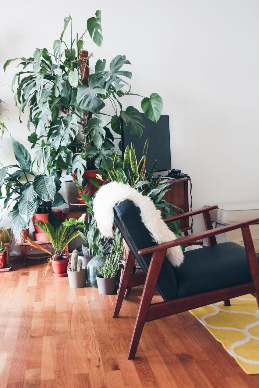 fotelja i biljke
